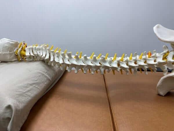 枕頭 頸椎
